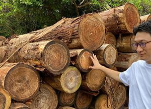 内地材の杉材に比べ、とても濃く、硬い材料です。